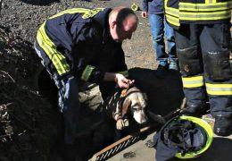 Hund in Kanal gefangen! Feuerwehr leistet Hilfe